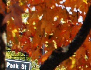cropped-fall-leaves-park-street