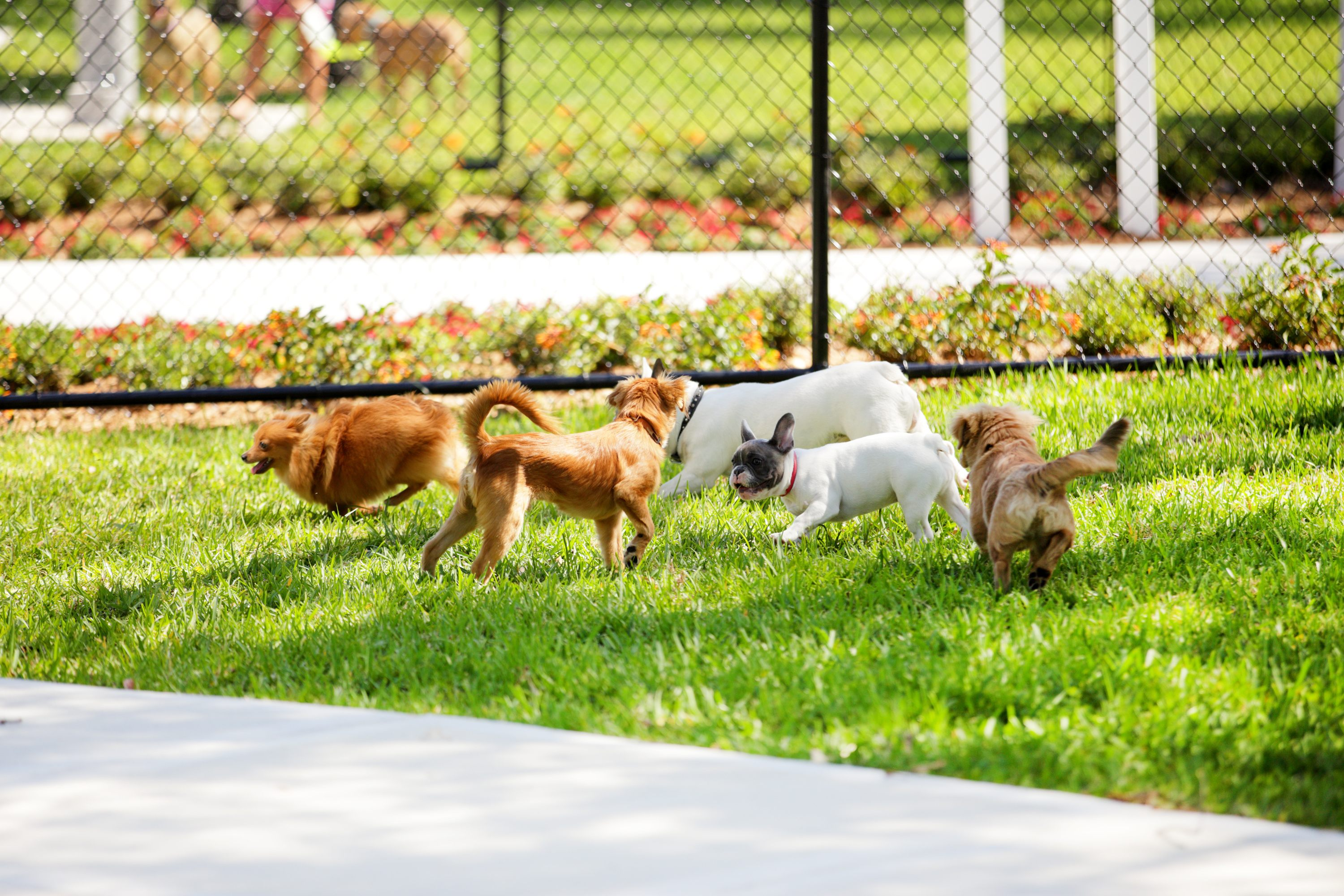 Stock image of a dog park