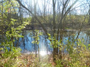 Scioto Grove Pond