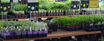 Plant Sale Event Photo