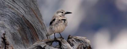 Birding Event Photo