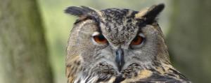 Movie Matinee Owl Power Event Photo
