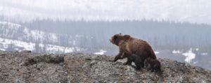 Bears Movie Matinee Event Photo