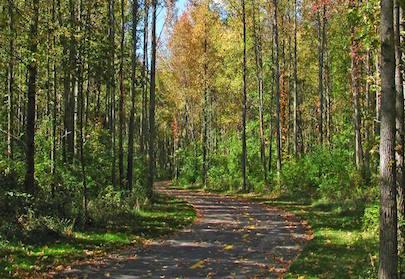 Walnut Woods featured image