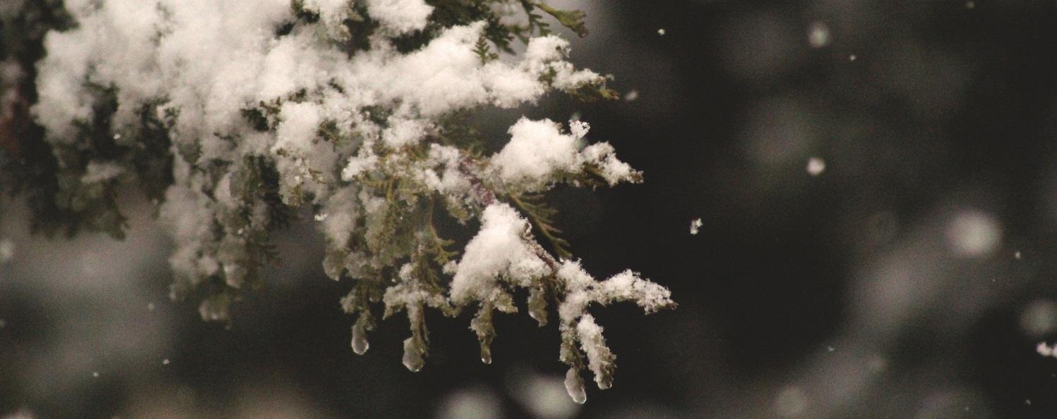 Snow Event Photo